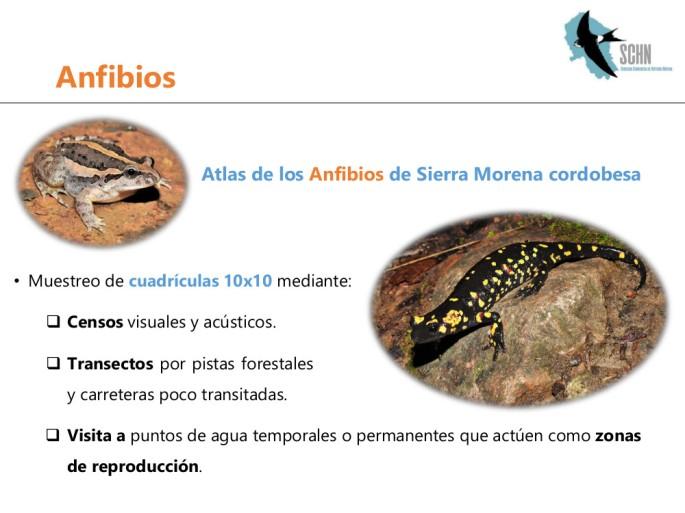 anfibios1