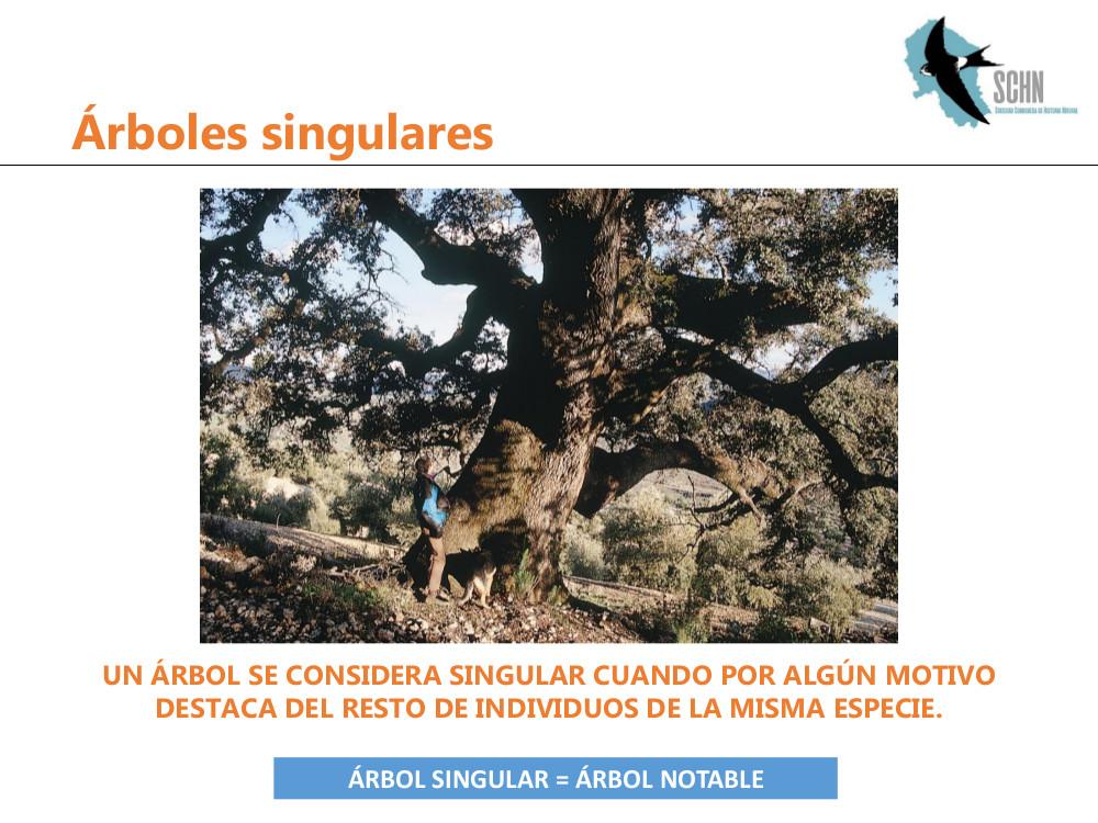 arboles singulares