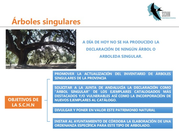 arboles singulares5