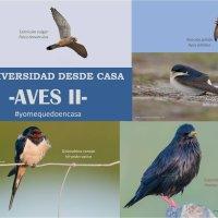 BIODIVERSIDAD DESDE CASA                 - AVES II-