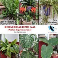 Biodiversidad desde casa -    Plantas ornamentales.