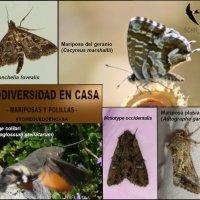 BIODIVERSIDAD DESDE CASA: MARIPOSAS Y POLILLAS