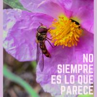 NO SIEMPRE ES LO QUE PARECE (Miguel Ángel Núñez)