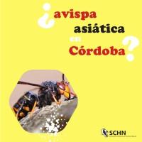 ¿Avispa asiática en Córdoba?