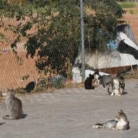 Postura de la Sociedad Cordobesa de Historia Natural ante las colonias felinas